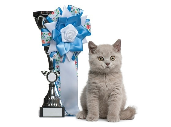 Cat with a trophy with ribbon