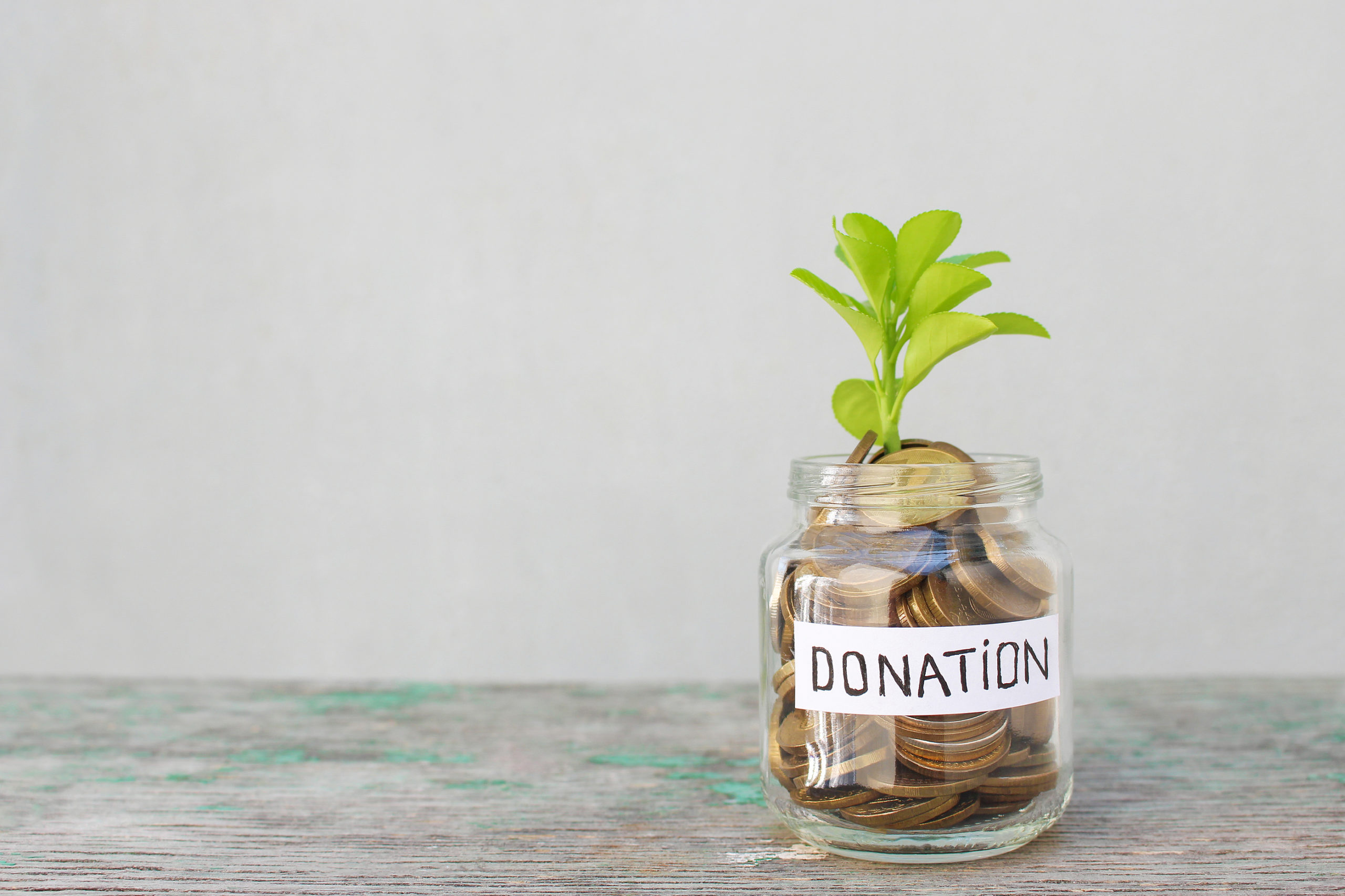 Plant growing in donation jar